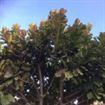 Green Tree - Guardería infantil inglésa